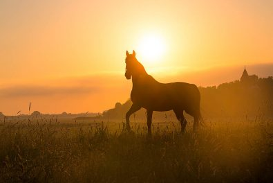 Schleswig-Holstein, Nordseeküste. Halbinsel Eiderstedt. Sonnenaufgang und Nebel. Ein Pferd auf einem Deich.