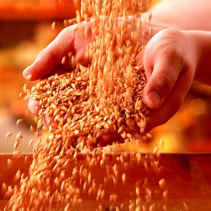 Food, Foodfotografie. Getreide in den Hände halten.