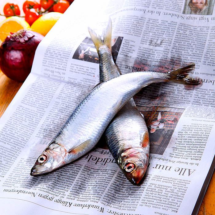 Food, Foodfotografie, Norddeutschland, frische Heringe auf Zeitungspapier. Fisch