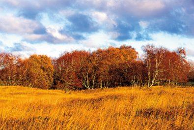 Schleswig-Holstein, Ostseeküste im November
