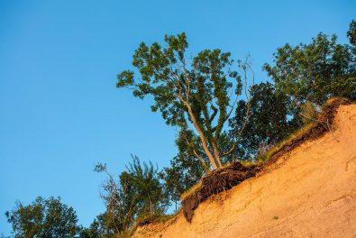 Schleswig-Holstein, Ostseeküste, Brodtener Steilufer. Abbruchkante mit Bäumen im Sommer. Foto: Ingo Wandmacher