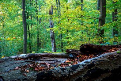 Waldgebiet und Landschaftsschutzgebiet Riesebusch in Bad Schwartau. Jahreszeiten im Wald. Bilder von Bäumen im Frühjahr, im Herbst und im Winter. Foto: Ingo Wandmacher.