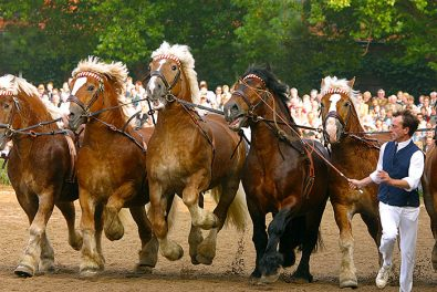 NRW Münsterland, Pferde, Münsterländer