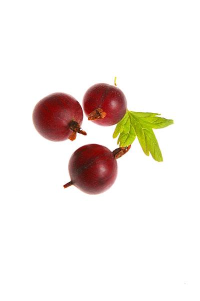 Raritäten mit Biss. Food, Obst, Jostabeere