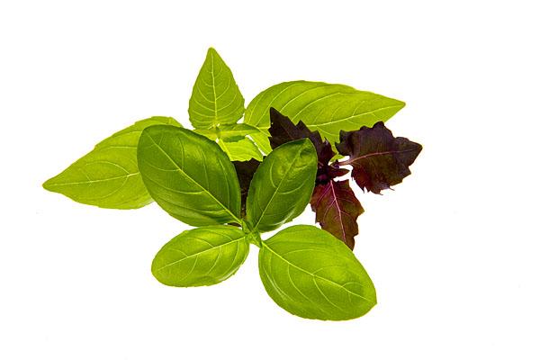 Raritäten mit Biss. Food, Gemüse,Basilikum