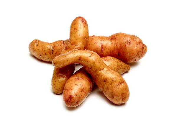 Raritäten mit Biss. Food, Gemüse, Kartoffelsorte Bamberger Hoernchen.